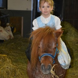 Pony auf der Binsalm mit Magdalena