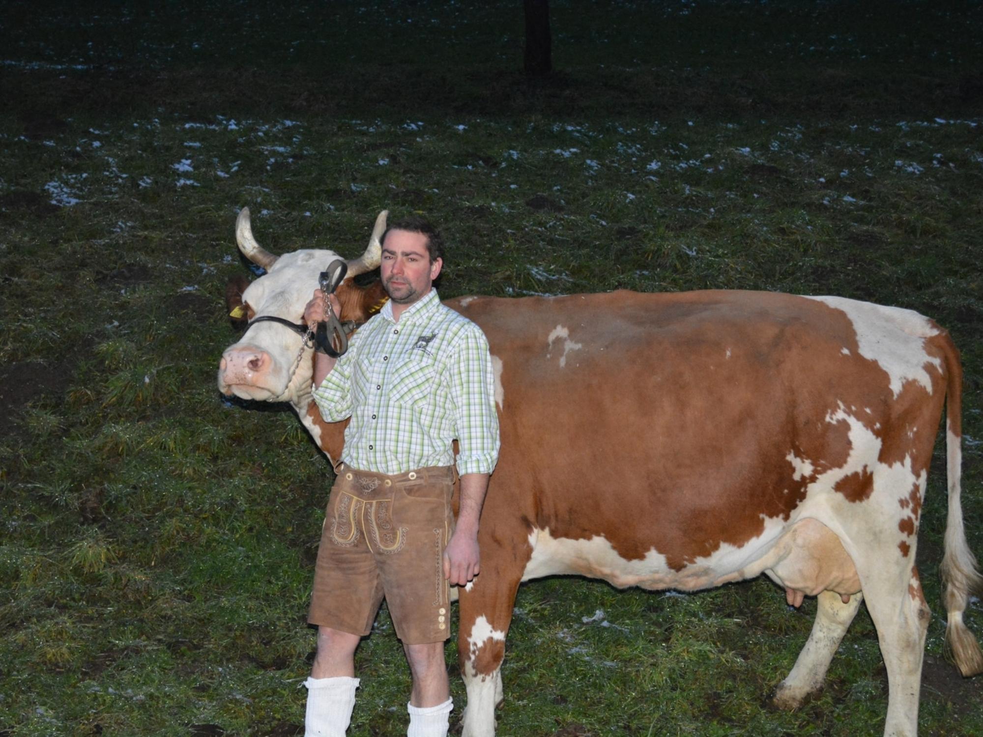 Wirt von der Binsalm mit Kuh Laura