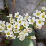 Frühling Binsalm Karwendel-Wanderung